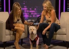 Jennifer Aniston Buys $5 Million Penthouse for Dog; Announces His Death