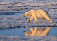 Scientist Who Exposed Climate Threat to Polar Bears Is Suspended After Big Oil Pressures Obama Administration