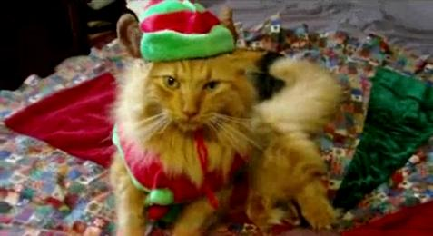 Funny Picture Cats on Cat Singing Jingle Bells Song Youtube Animals Dogs Horse Funny Joke